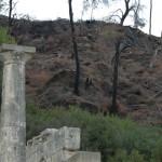 Olympie - Octobre 2007 - Colonnes et arbres brûlés